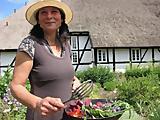 Kräuterführungen im Bauerngarten