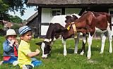 Die typischen Tiere des Bauernhofes ganz nah erleben/Backtag