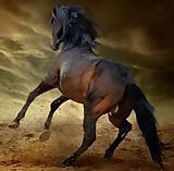 Gala-Show: Atemberaubende Pferdeshow mit vielen tollen Schaubildern rund ums Pferd und Pony