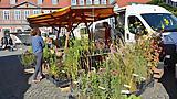 Waren (Müritz): Grüner Markt