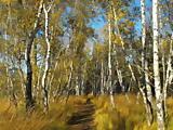 """geführte Wanderung: """"Herbsttour"""